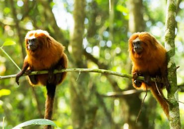 iquitos the exotic jungle 2 days