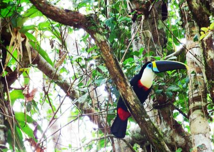 Tour Iquitos Tropical Forest 3 days